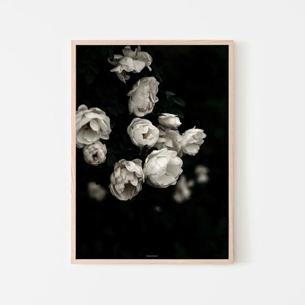 Juliste 50x70 Ruusut